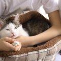 猫が黄色い物を嘔吐した時の原因と考えられる病気