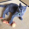 猫が畳の上でとる行動5つ