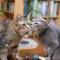思わず笑っちゃう♡猫のコミカルな動き3つ