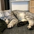 猫が好きな人の前でしかしない『寝姿』5選