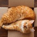 猫が箱を好きな3つの理由!人気のサイズにも理由があった