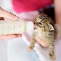 子猫にミルクを与える時間や量、与え方の注意点とは