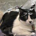 猫が飼い主といて気まずいと思う瞬間5つ