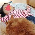 まるで犬と話題の大きな猫は、イクメンぶりが半端ない!