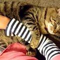 猫が飼い主の手をぎゅっと抱きしめる心理5つ