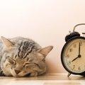 猫の寝すぎは病気?睡眠時間やたくさん寝る理由は?