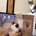 寝たふりをして危機回避を行う二匹の猫ちゃん