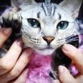 盗み食いをしちゃった猫ちゃん!かわいいダンスで許しちゃう?