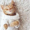 猫に腹巻きを着させるメリットや作り方