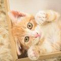 猫の肉球は「足の裏ではない?!」猫のうしろ足の秘密