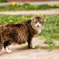 猫に生理がない理由と出血があった時の病気