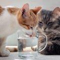 猫が食欲不振だけど水は飲む…考えられる病気7つと対処法