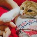 猫が飼い主に乗せてくる体のパーツ3つと心理