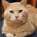 木の穴で体調不良になった猫…困難な救出活動の行方は?