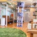 静岡の猫カフェおすすめ3選!