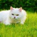 猫が後ずさりする気持ちと可能性のある病気