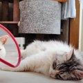 2ショットがご希望♡思惑がうまく行かない猫さんたち!