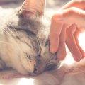 イエネコとは?猫が人と暮らすようになった歴史