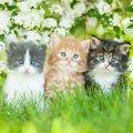 あなたの猫は何タイプ?顔の形と性格には関連性があるらしい