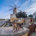 猫の楽園『マルタ島』地中海の美しい島で猫に出会えるスポット5選