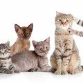 先住猫と新入り猫を仲良くさせる方法