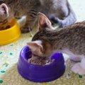 猫の餌代を節約するための5つのポイント