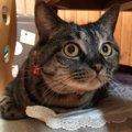 ゆっくり動かすのがコツだった!猫が『ワクワク』するレーザーポイン…
