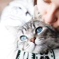 ペットの盗難に注意!愛猫の誘拐を防ぐためにできる3つの対策