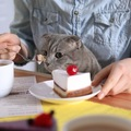 猫が飼い主のご飯を狙う4つの理由と対策法