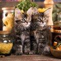 猫を絶対遠ざけるべき『部屋の危険ポイント』ランキングワースト4