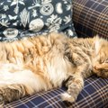 猫にも寝癖ってできる?ぼさぼさになっちゃう原因