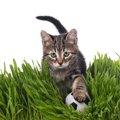 猫が乱入したスポーツの試合7選