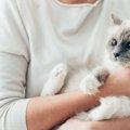 猫アレルギーに効果のある3つの対策