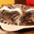 大理石が猫の暑さ対策に有効?大理石を使うメリットやおすすめのひん…