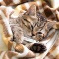 猫のインフルエンザの症状と人にうつらない理由
