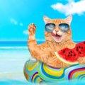 猫にスイカを与える時の注意点