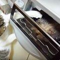 お魚大好き!鼻と前足でグリルを開けちゃう器用な猫ちゃん