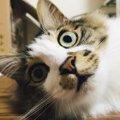 LAYLAの12猫占い【9/28~10/4】のあなたと猫ちゃんの運勢