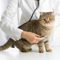 猫の腹水の原因と症状。隠れた病気の可能性について