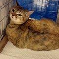 3年で17匹に…退去命令が出た賃貸物件の猫を保護 Vol.2