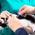 猫にマイクロチップを埋め込む利点と問題点