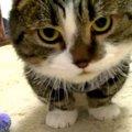 【取ってこーい!】何度もオモチャを運んできてくれる猫ちゃん