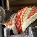 猫には『防寒服』を着せない方が良い?メリットとデメリット