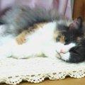 猫が昼寝をするのはなぜ?睡眠時間や適した場所