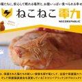 いつも通りの暮らしで猫支援!「ねこねこ電力」