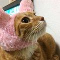 子猫を1匹保護したつもりが…突然6匹に増えた?【保護猫エピソード】