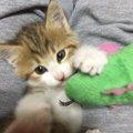 道で動けなかった子猫との幸せな暮らし