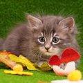 猫はきのこを食べても問題ないのか