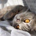 猫から愛されてる証拠になるサイン5つ