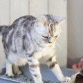 猫がおかしな体勢でトイレをする3つの理由